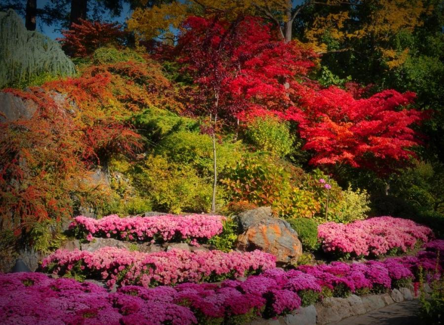 Busch Gardens Victoria Canada Photos