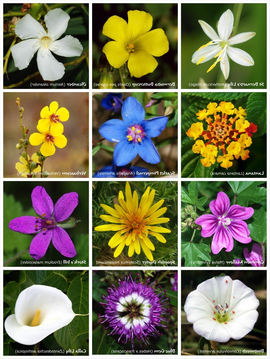 Photos Of A Flower