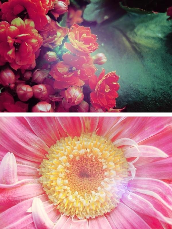 Essay flowers