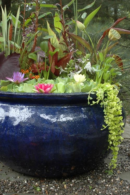 Container water garden photos for Planting pond plants in containers