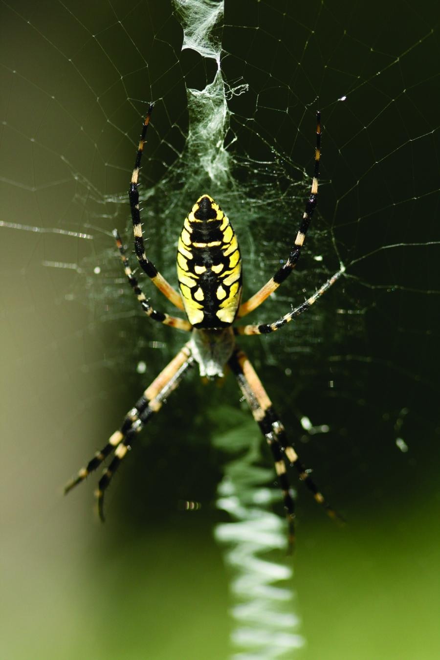 how to get rid of spiders in your garden