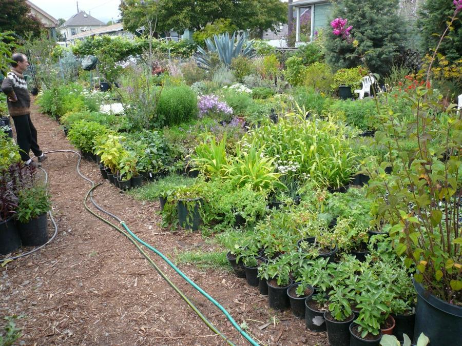 Healing Labyrinth Garden Design