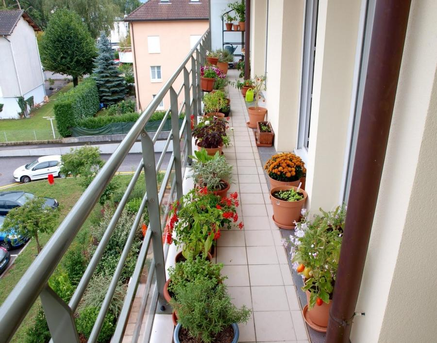 Trendy Small Balcony Decorating Ideas : Fiona Balcony Garden