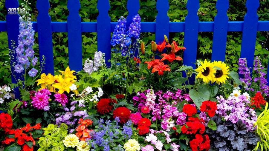 Цветы многолетники растущие в тени