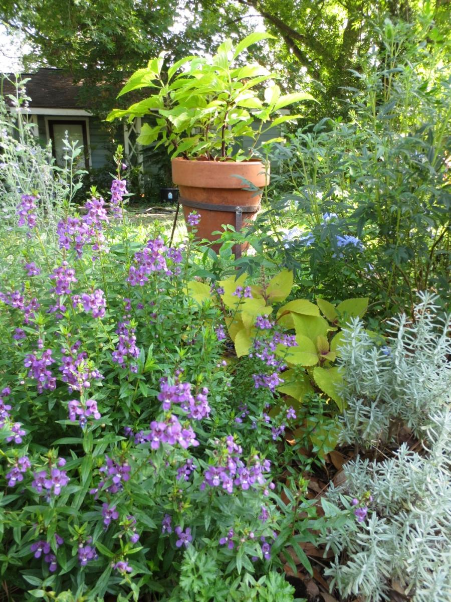 Our front garden with lavender and various flowers. Even my...