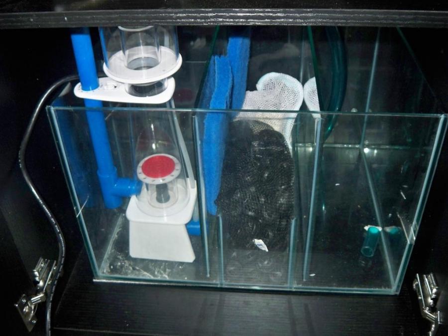 Sc Aquarium Photo Contest