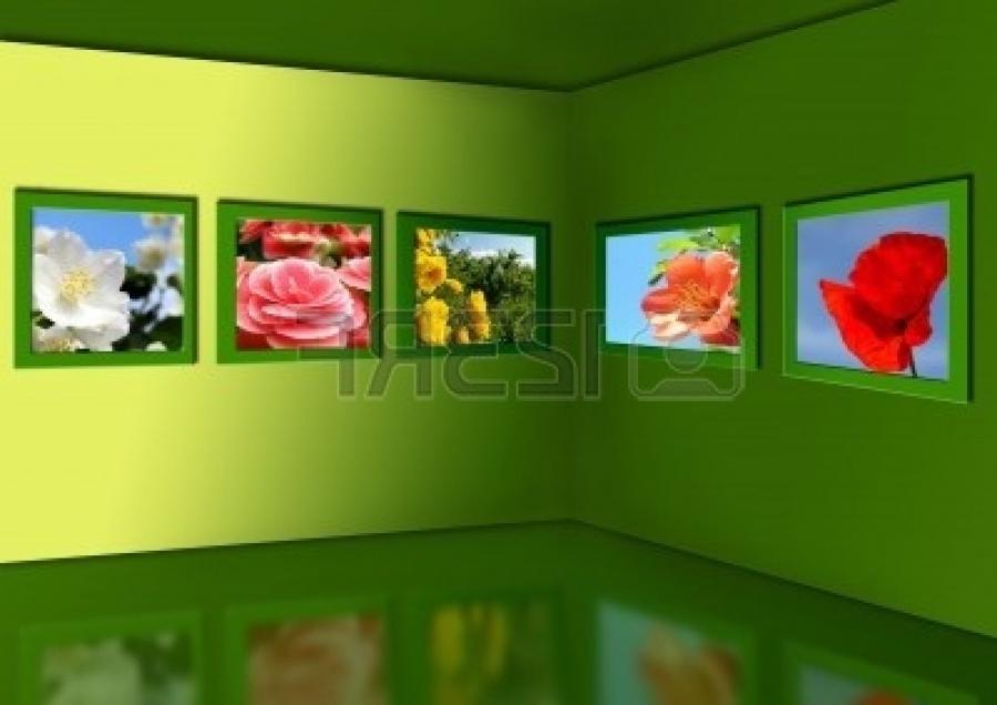 Gallery of flowers. Flower photos hang on walls of a green room