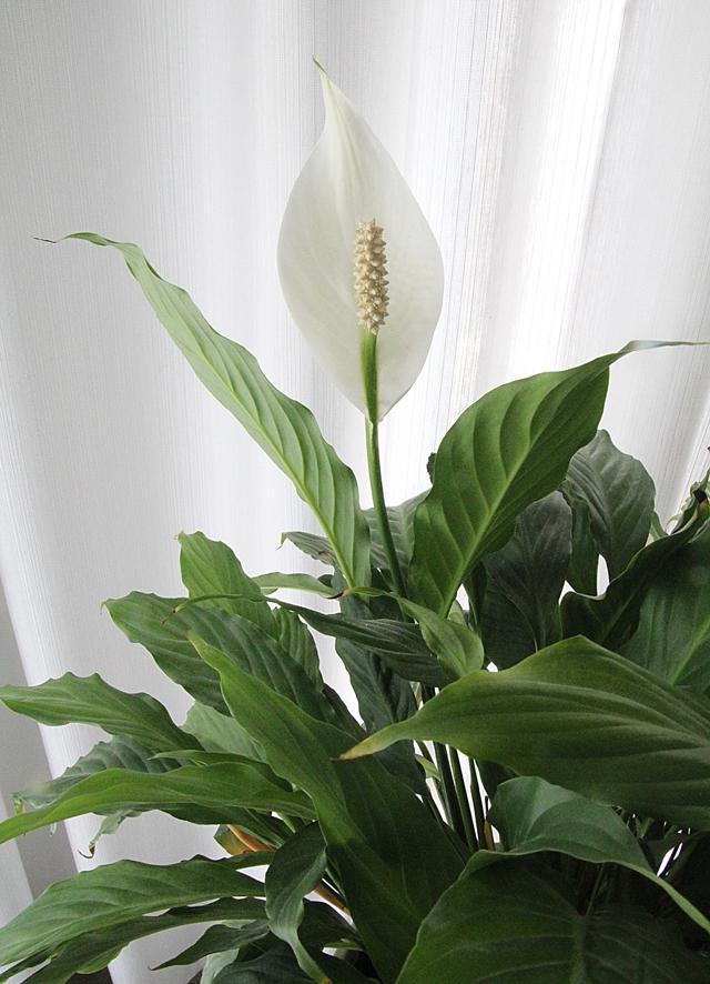 Indoor Plants Flowers Photos