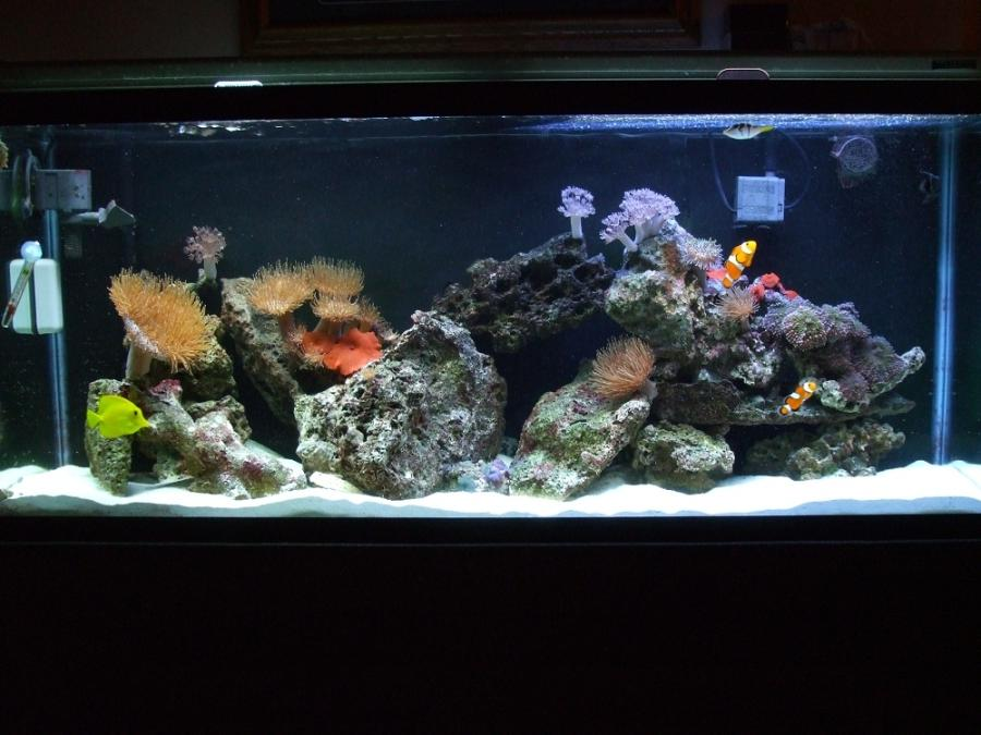 50 gallon saltwater aquarium tanks