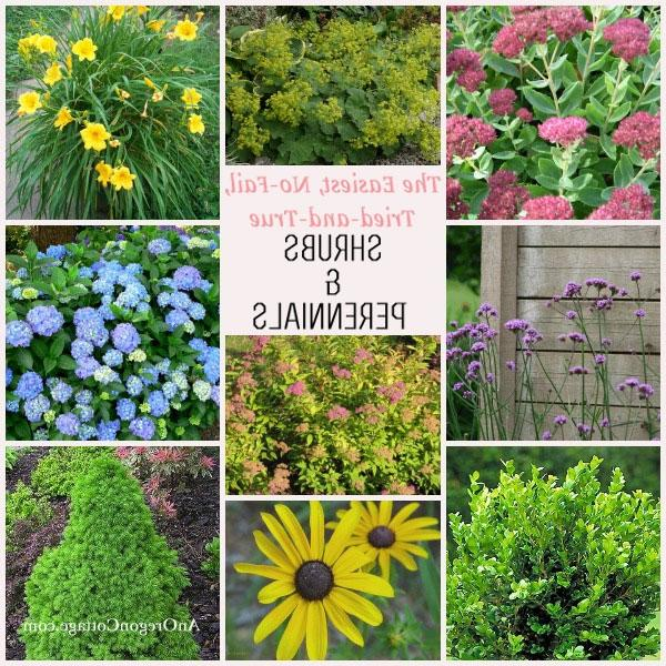 Garden plants shrubs photos for Easy care shrubs front house