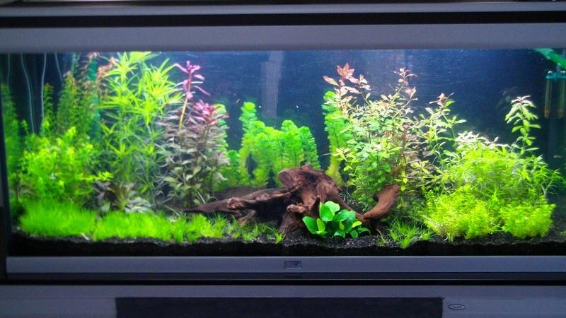 photo de vos aquarium