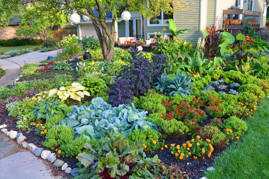 Yard and garden photos for Edible garden designs