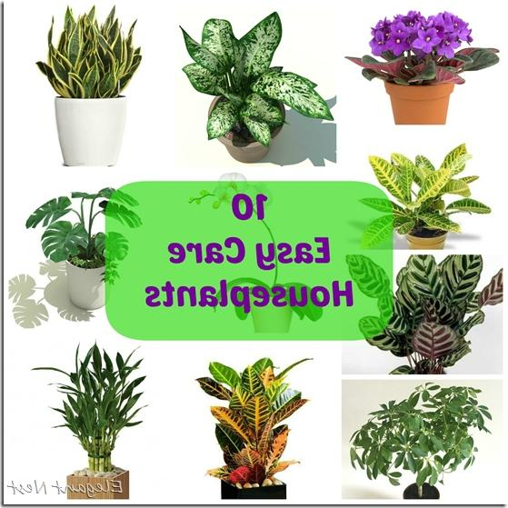 Photo of house plants for Easy to take care of indoor plants