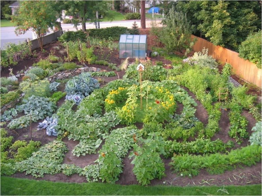 Photos of beautiful vegetable gardens for Beautiful vegetable gardens