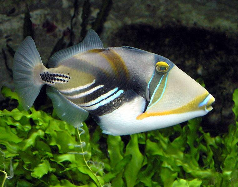 Names and photos of aquarium fishes for Names for pet fish