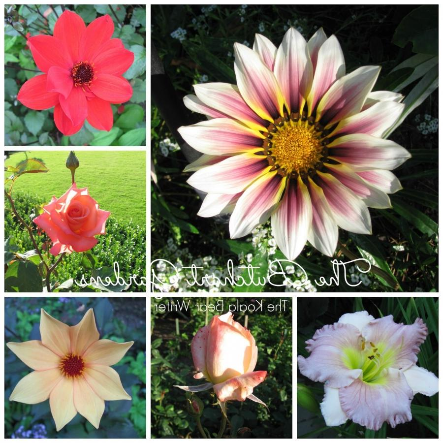 Types Of Flowers Names And Photos