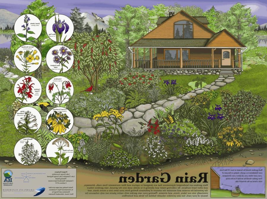 rain garden designs photos
