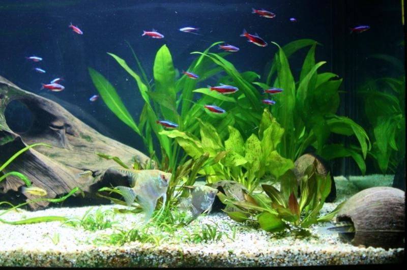 photo plante aquarium eau douce. Black Bedroom Furniture Sets. Home Design Ideas
