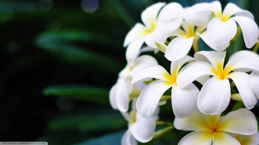 Фото цветы на рабочий стол в full hd