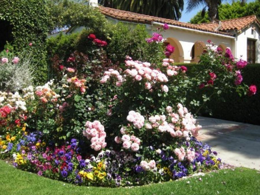 Beautiful flower bed photos for Beautiful flower beds