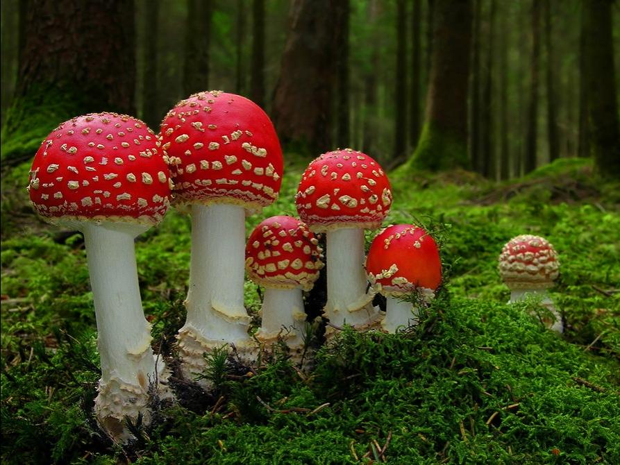 Mushrooms are masterpieces of natural engineering. The overnight...