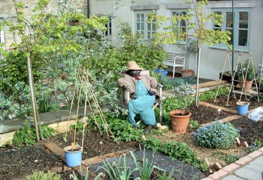 photos home vegetable gardens