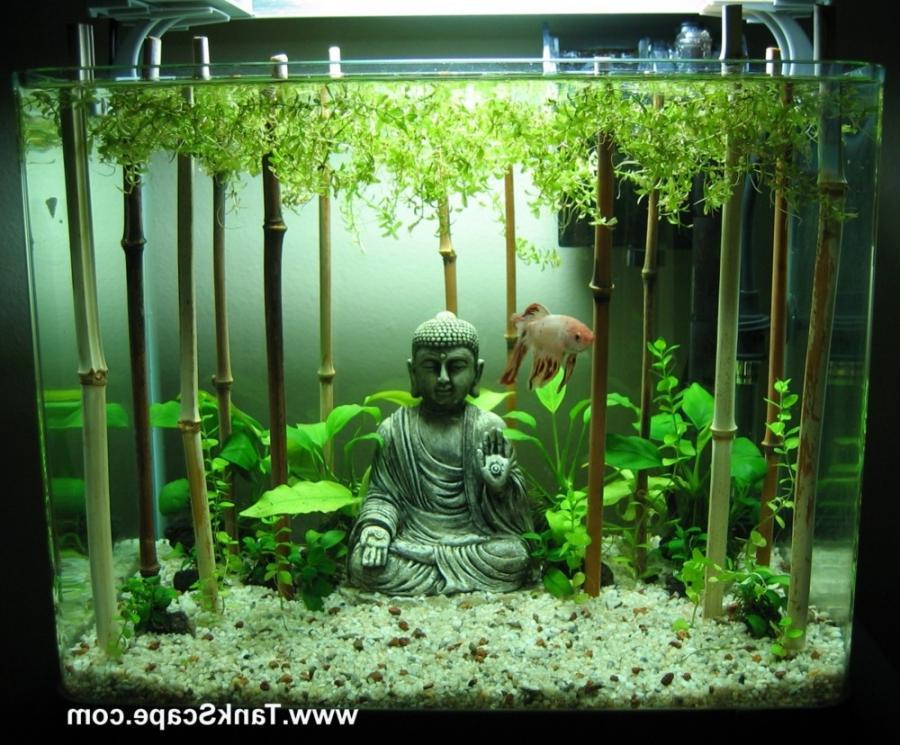 Bamboo aquarium plants photos