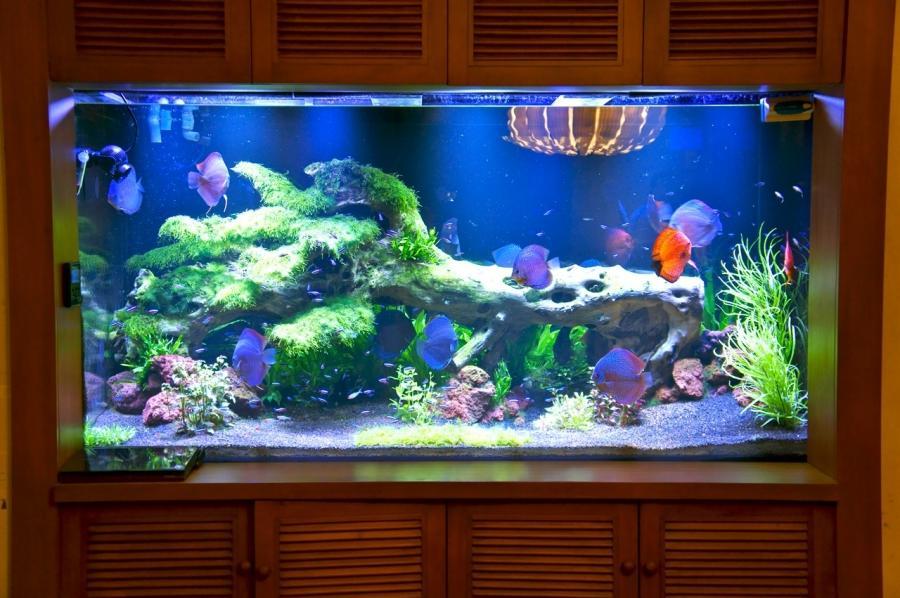 discus aquarium photos
