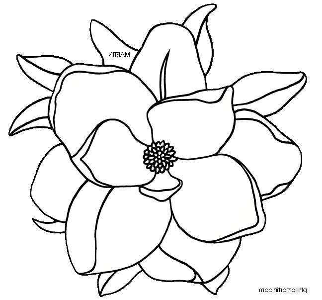 Louisiana State Flower Photos