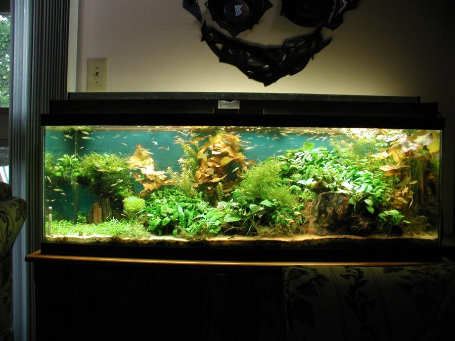 Beautiful aquarium fish photos Beautiful aquariums for home
