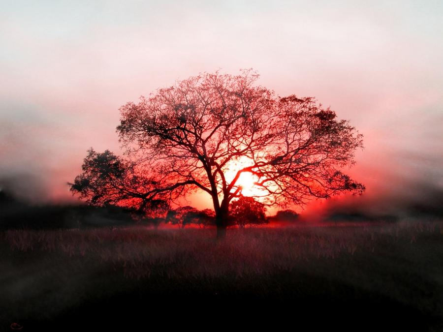 Beautiful wallpapers for desktop background photo editor - Nature wallpaper editor ...