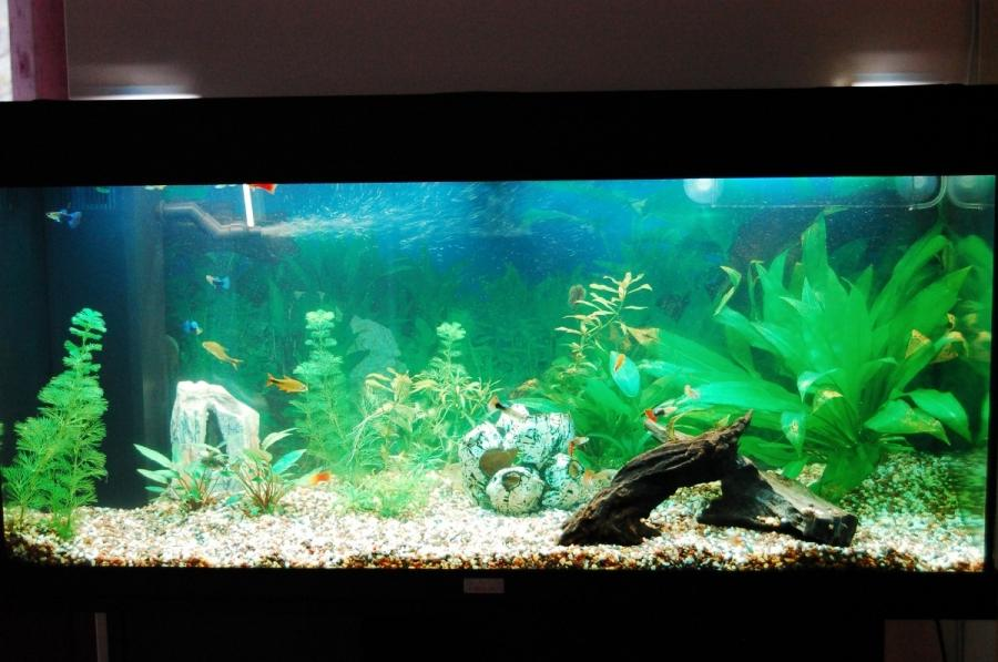 Photos large freshwater aquariums for Co2 fish tank