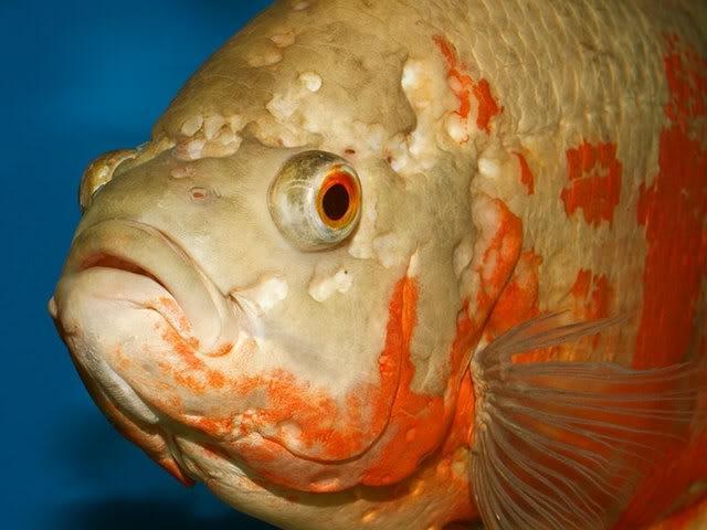 Aquarium Fish Diseases Photos