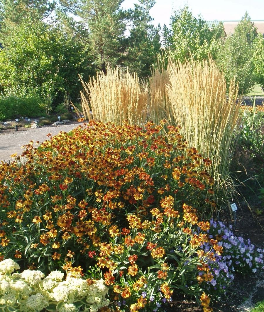 Perennial Grasses For Alberta : Calgary gardens photos