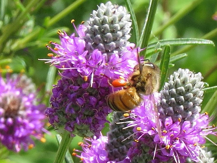 Garden Flowers Photos Name
