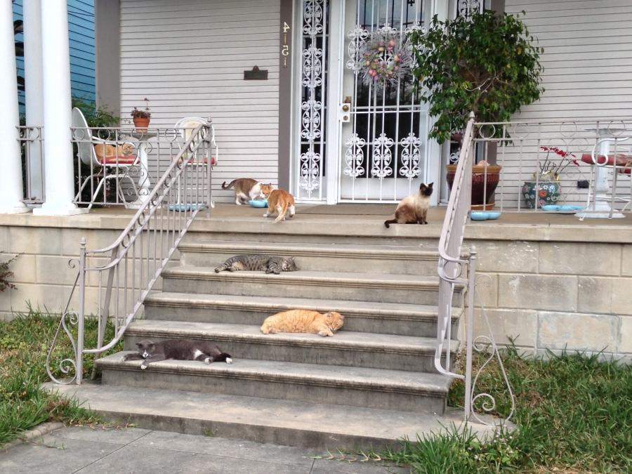 File:Seven Cats on the Front Porch.jpg