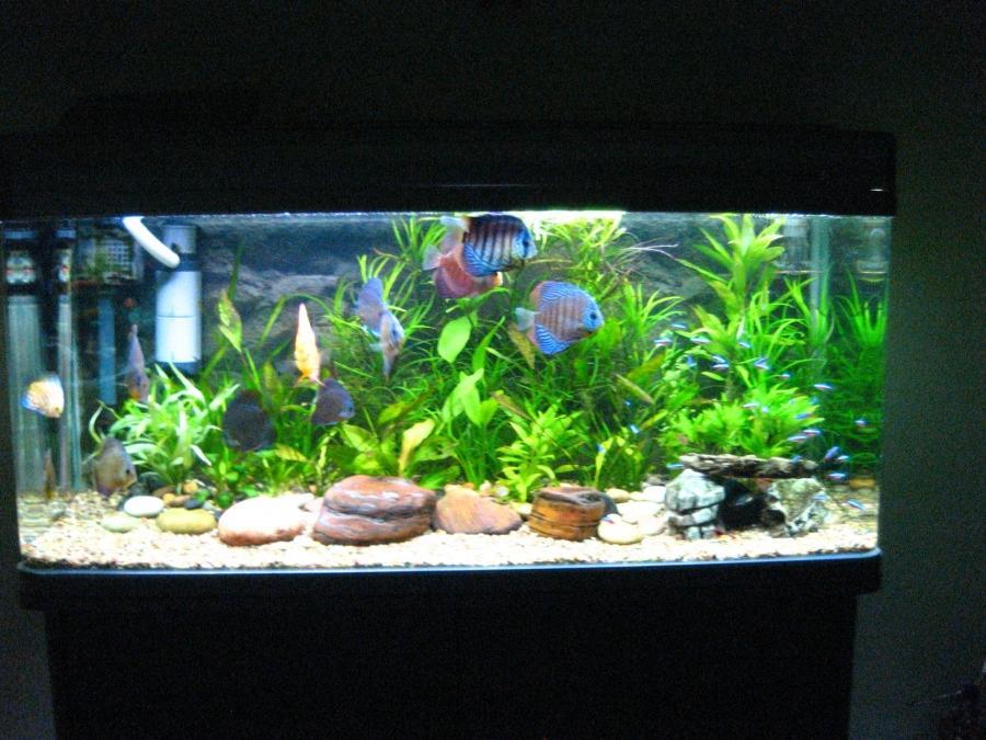 aquarium de discus photo