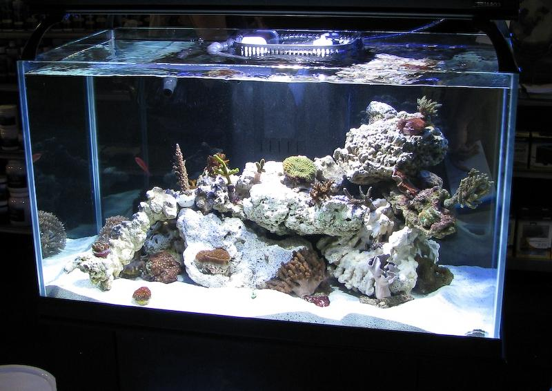 large saltwater aquarium tanks