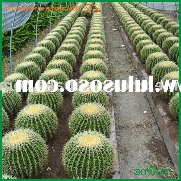 Indoor ornamental plants indoor ornamental plants manufacturers