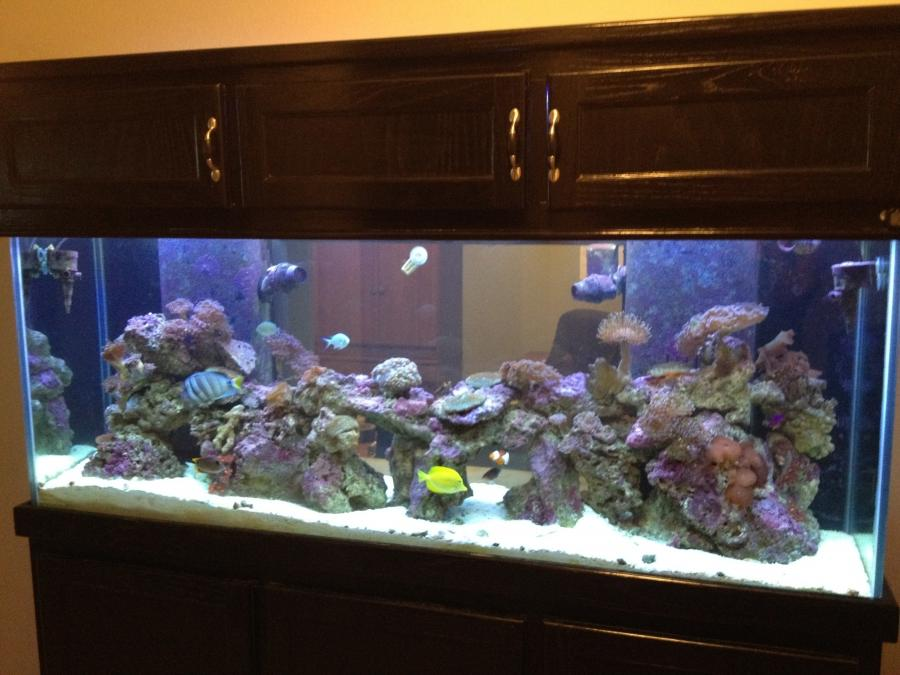 200 Aquarium Gallon Photo Reef