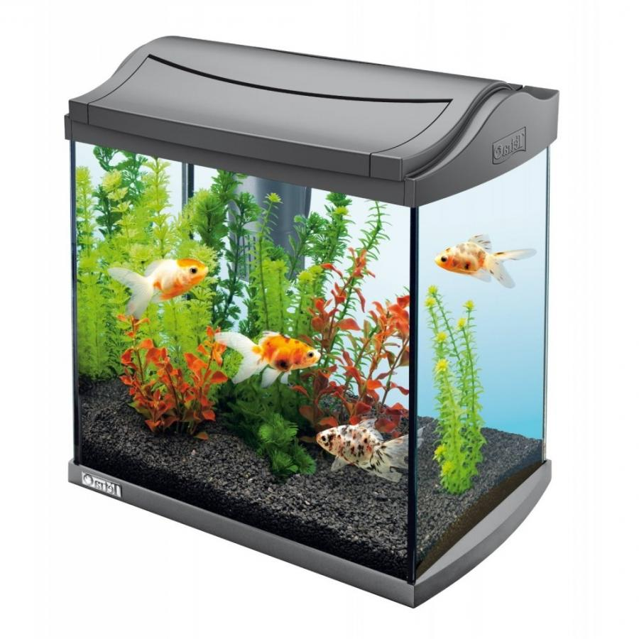 Aquarium fish photo tetra for Tetra fish tanks