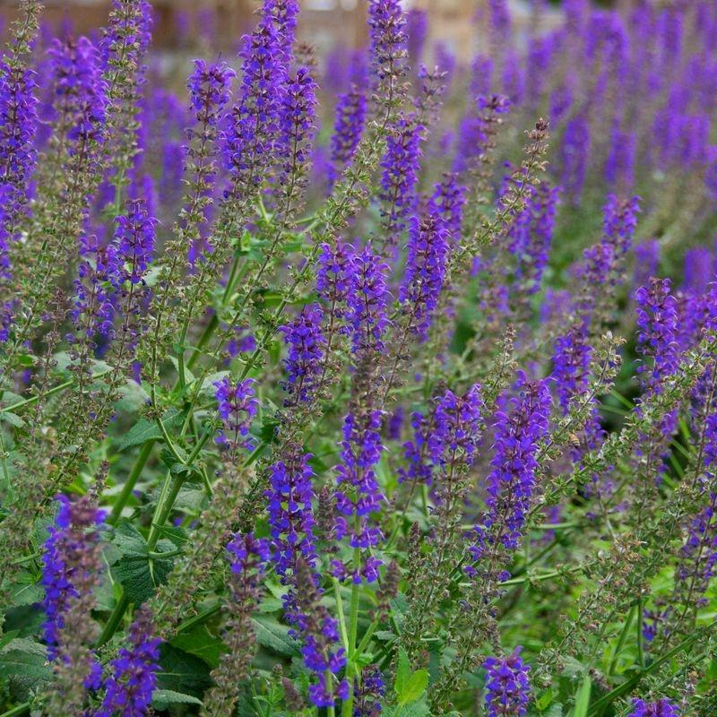 Purple Flower Names Photos