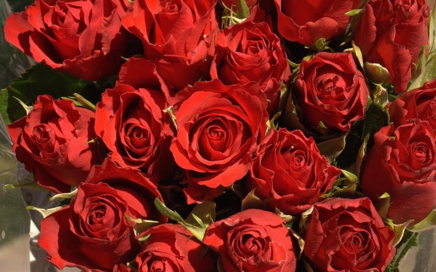 Bunch of red flowers photos - Bunch of roses hd images ...