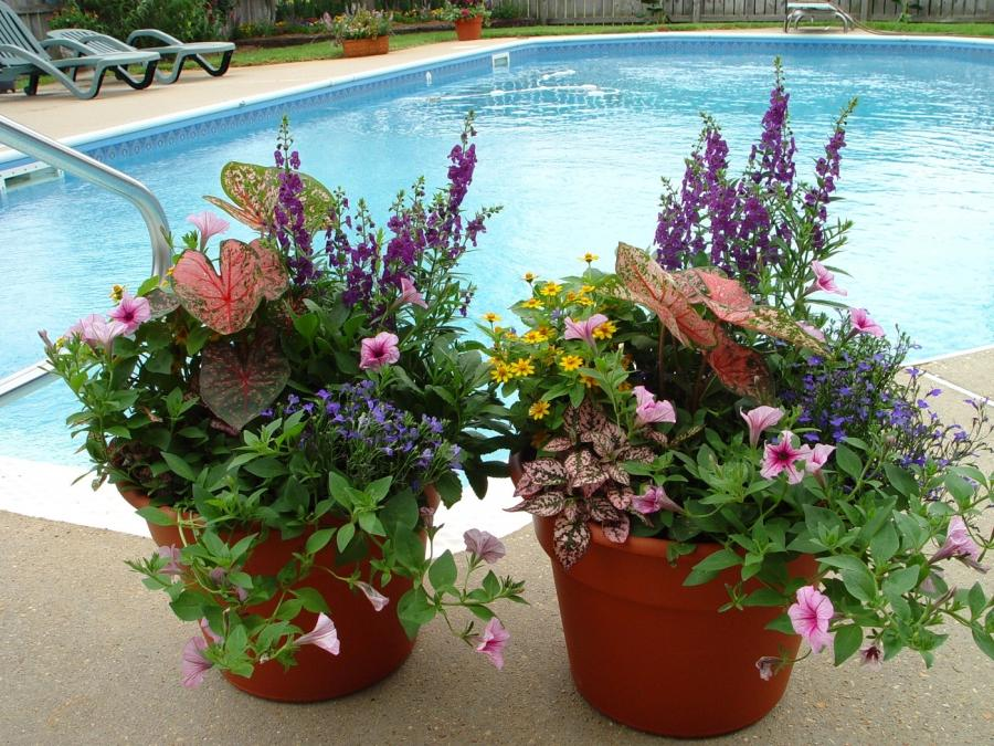 Container gardening flowers photos for Garden pool care