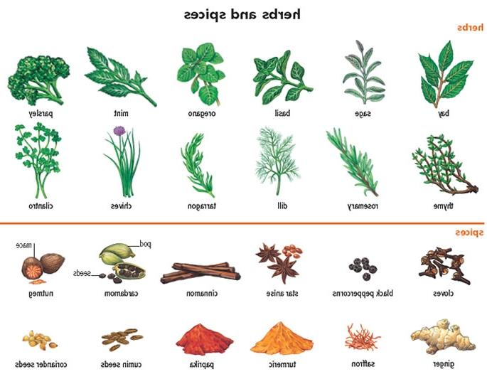herbs definition pronunciation