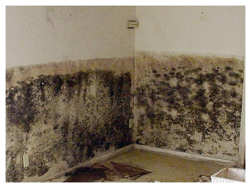 Mold drywall photos for Does drywall have asbestos