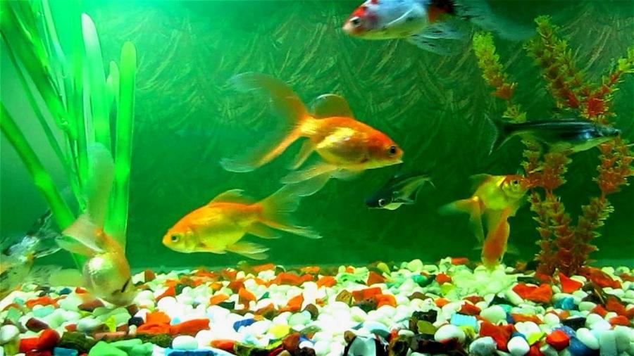 Плавающие рыбки обои на рабочий стол 4