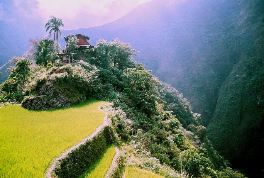 ifugao Banaue and ifugao history banawor, a primitive word, was the original name of the municipality of banaue it is the ancient name given to a swift flying night bird that lives in one of the oldest sitios of the town once known as banawor.