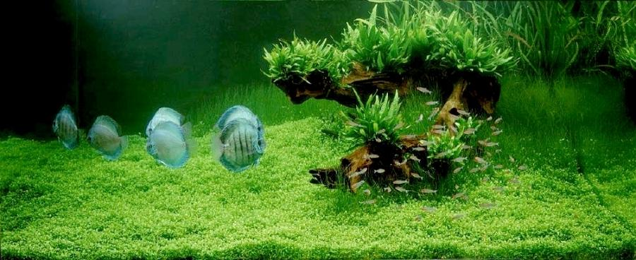 Decoration aquarium eau douce 28 images 2013 aga for Decoration pour aquarium d eau douce