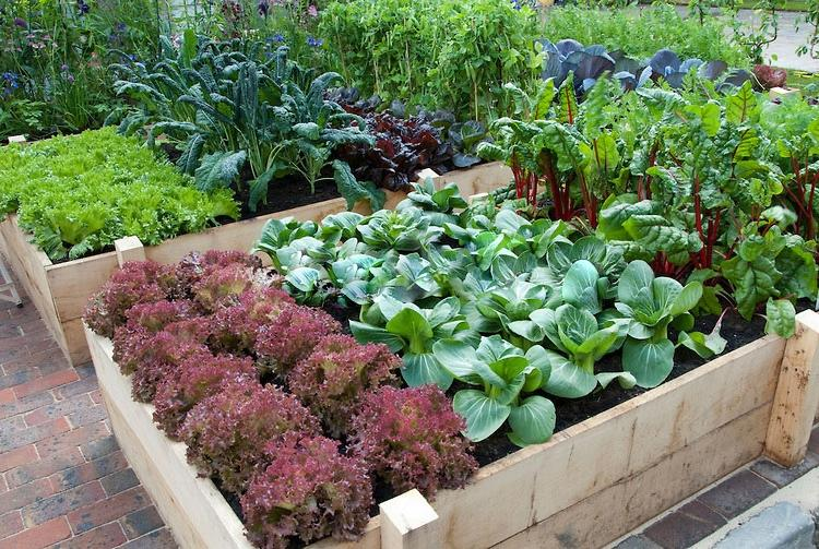 Raised vegetable garden bed photos